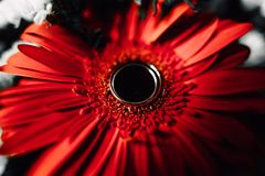 Wedding rings on a flower. Wedding rings on a red flower Royalty Free Stock Photo