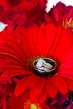 Wedding Rings and Red Flowers Royalty Free Stock Photo