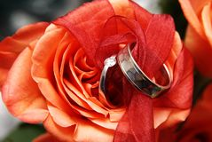 Wedding rings on a red rose. Two white gold wedding rings on a red rose royalty free stock photography