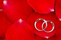Wedding rings in red rose petals Stock Photography