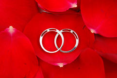 Wedding rings in red rose petals Royalty Free Stock Photo