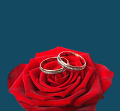 Wedding rings and on red roses Stock Photos