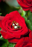 Wedding rings on red roses bouquet. Wedding rings on red roses wedding bouquet stock photography