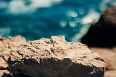 Wedding rings on the rocks near the sea Stock Photography