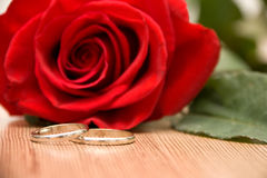 Wedding Rings and Rose. Wedding Rings and Red Rose Royalty Free Stock Images