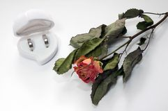 Wedding rings and rose. Two wedding rings made of white gold in a box and dry red rose Royalty Free Stock Photography