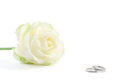 Wedding rings and a rose. Two wedding rings with white rose on background, shot on white Royalty Free Stock Images