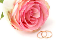 Wedding rings with rose. Wedding rings on a white background Stock Images