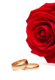 Wedding rings and rose. On white background. Isolation Royalty Free Stock Photography
