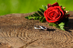 Wedding rings with rose. With a narrow depth of field royalty free stock photography