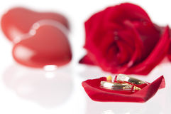 Wedding rings and rose.GN Royalty Free Stock Image