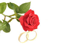 Wedding rings and rose isolated over white with sp Royalty Free Stock Image