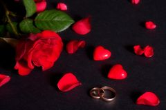 Wedding rings and rose petals Stock Photos