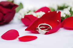 Wedding rings on rose petals Stock Images
