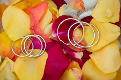Wedding rings on a rose petals Stock Photos