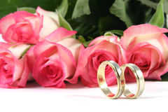 Wedding rings and roses. On white background Stock Photography