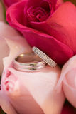 Wedding Rings in Roses. Wedding Rings in Pink and Red Roses royalty free stock photos