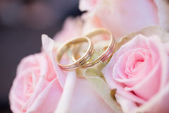 Wedding rings and roses. Marriage, pink roses, gold rings, detail royalty free stock photo