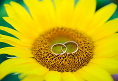 Wedding rings and roses Stock Photos
