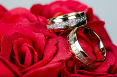 Wedding rings rosess Royalty Free Stock Images