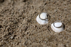Wedding rings on sea shell. On the coral beach Royalty Free Stock Photo