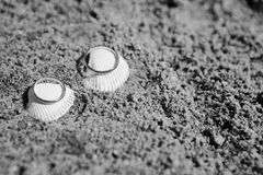 Wedding rings on a sea shell. Wedding rings on sea shell on the coral beach Stock Photo