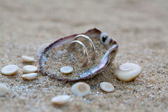 Wedding rings in sea shell on the coral beach Royalty Free Stock Photography