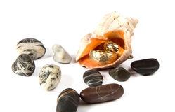 Wedding rings in a sea shell Stock Images
