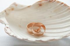 Wedding rings in seashell Stock Photos