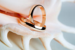 Wedding rings on the shell.  Royalty Free Stock Photography