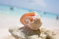 Wedding rings in a shell Royalty Free Stock Images