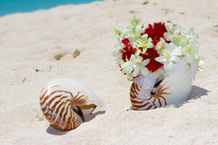 Wedding rings on a shell on beach Stock Photography
