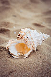 Wedding rings in a shell on sea coast Royalty Free Stock Image