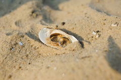 Wedding rings in a shell Royalty Free Stock Photo