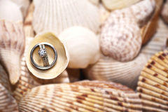 Wedding Rings on Shells. A closeup view of a pile of shells with wedding rings on them. Beach wedding Royalty Free Stock Photos