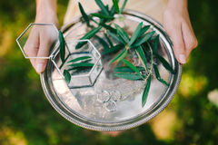 Wedding rings on a silver tray with olive branches in their hand Royalty Free Stock Images