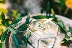 Wedding rings on a silver tray with olive branches. Wedding jewe Royalty Free Stock Images