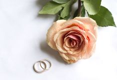 Wedding rings and single rose royalty free stock photography