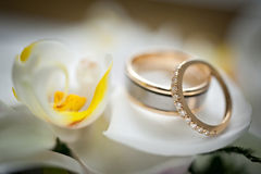 Wedding rings sitting on a white and yellow flower Royalty Free Stock Images