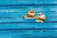 Wedding rings on snails royalty free stock photography