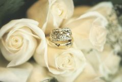 Wedding rings on soft blurred roses background Royalty Free Stock Photo