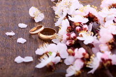 Wedding rings. Spring. Flowering branch on wooden Stock Images