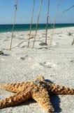 Wedding rings on starfish. Close up of wedding rings on top of starfish, beach scene Royalty Free Stock Photos