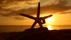 Wedding rings and starfish on beach at sunset love concept stock footage