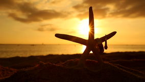 Wedding rings and starfish on beach at sunset love concept. Closeup of two bands for casual marriage celebration Oahu Hawaii stock video