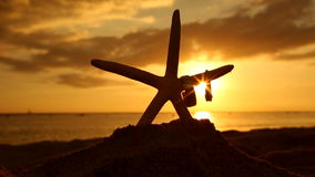 Wedding rings and starfish on beach at sunset love concept stock video footage