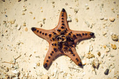 Wedding rings on starfish Stock Images