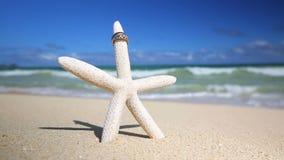 Wedding rings and startfish beach love concept stock video