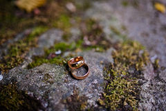 Wedding rings at stone Stock Photography