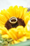 Wedding Rings on Sun Flower. Two wedding rings on a yellow sun flower Royalty Free Stock Photography